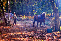 the horse-loggers (3)