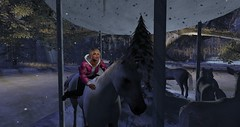 Riding a horse (oojannice29oo) Tags: janni horse winter ride