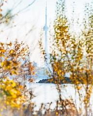 In Hiding (Smaku) Tags: lakeshore skyline urban nature yellow golden lakeontario morning toronto cntower ontario sunrise