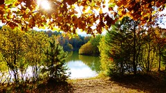 Sunny Autumn Lake (obscure.atmosphere) Tags: deutschland germany hamburg herbst autumn otono automne   laub foliage sonnenschein sonnenlicht licht light ligero lumiere   sunlight sunshine sun sonne   sunny sonnig himmel heaven sky cielo cieux   see lake lago lac   natur nature naturista naturaleza   wald forest bosque selva foret   woods landscape landschaft paisajes region paysage   bltter leaves baum bume tree trees beach strand sand bush gebsch reflection reflektion colorful