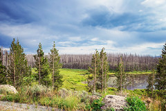 Yellowstone (ExceptEuropa) Tags: park travel sky usa cloud nature forest landscape photography nationalpark nps roadtrip yellowstonenationalpark yellowstone traveler