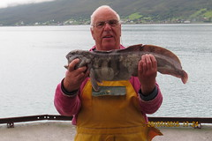 "Bumper with a Wolffish • <a style=""font-size:0.8em;"" href=""http://www.flickr.com/photos/113772263@N05/20787332753/"" target=""_blank"">View on Flickr</a>"