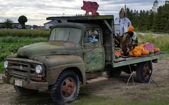 International L160 (D70) Tags: canada truck pumpkin island bc delta columbia company international squash british harvester ih ihc westham l160