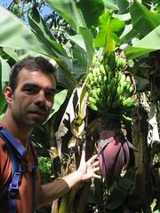 """Régime de bananes sur le chemin du Machu <a style=""""margin-left:10px; font-size:0.8em;"""" href=""""http://www.flickr.com/photos/83080376@N03/21499260142/"""" target=""""_blank"""">@flickr</a>"""