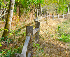 Around the Corner. (Omygodtom) Tags: park autumn abstract detail tree fall nature oregon composition contrast fence season outdoors google nikon flickr escape dof natural country scene trail ceder oaksbottom d7000 nikon70300mmvrlens