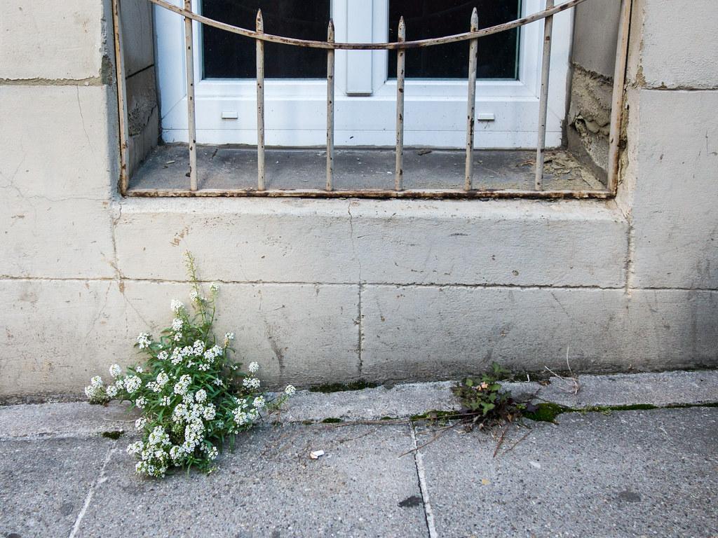 The World S Best Photos Of Stein And Zaun Flickr Hive Mind