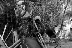 IMG_2015_10_09_3668a (gravalosantonio) Tags: pollo huevo huerta gallina gallinero ecologico campero pollito