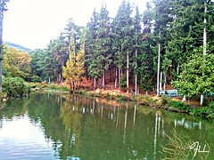 2015-11-08_01-57-01 (fil_____) Tags: autumn panorama tree green nature water river landscape outdoor ngc greece thessaloniki mycity makedonia        macedoniagreece  mythessaloniki