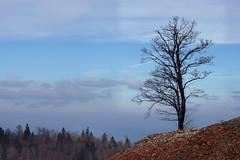 The beauty of nature (s_gulfidan) Tags: 200faves fantasticnature