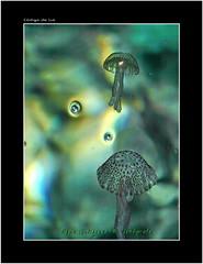 """BELLEZA BAJO EL MAR (CODIGO DE LUZ """"El Fotgrafo"""") Tags: mar agua medusa mallorca valldemossa aguaviva aguamala pepegutierrez pgutierrez cdigodeluz"""