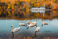 Congregants...... (Karl Tepfer) Tags: autumn reflection fall church parish geese pond colorful religion foliage pipeorgan rector coldspringharbor curate fallseason tepfer stjohnschurchofcoldspringharbor karltepfer jeanluchbert therevdavidjware therevlukeffodor