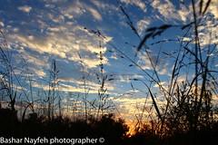 blue sky (bashar_jn) Tags: camera city blue light sunset sky sun green slr art love canon lens photography eos photo photographer post outdoor dusk palestine stm 1855 dslr beatiful 2015 natuer canonphoto 700d canon700d canoneos700d 1855is instagramapp eos700d