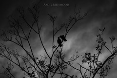Unconditional Love (Aadilsphotography) Tags: pakistan sunset white black tree birds canon photography 5d punjab rawal aadils