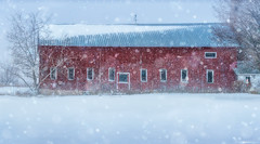 Barn in Blizzard #2 (Matt Anderson Photography) Tags: christmas blue winter red sky usa sunlight snow tree ice nature weather horizontal stone wisconsin barn fence season landscape outdoors photography frozen frost day farm nopeople panoramic farmland silo madison simplicity remote snowing agriculture multicolored blizzard plain idyllic vacations scenics selectivefocus tranquilscene covering traveldestinations colorimage mattanderson ruralscene beautyinnature nonurbanscene deciduoustree midwestusa coldtemperature builtstructure newmidwestusa