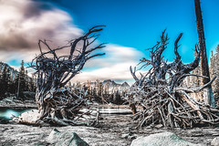 Colchuck Lake Trees (howellmm44) Tags: trees lake long exposure roots alpine wilderness colchuck bracketed