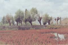 (rqlevy) Tags: canon ftb 35mm fuji reala100 expiredfilm analog leh ladakh india summer travel nature trees reflection
