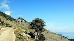 L'arbre (Skadar, Montngro) (Thibaut Fleuret) Tags: skadar lac lake travel voyage montngro montenegro europe nature paysage landscape arbre tree balkans
