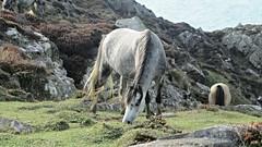 IMG_6002 (AliciaHamer) Tags: horse pembrokshire