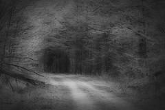 *** (pszcz9) Tags: polska poland przyroda nature las forest droga road parknarodowy nationalpark wiosna spring beautifulearth sony a77 biebrzaski bw blackandwhite monochrome czarnobiae pejza landscape