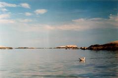 Moving in slow motion (Kelly Marciano) Tags: film analog 35mm cinestill 800 tungsten canona1 crossprocessed xpro light sea ocean sky seagull clouds birdnerd minotbeach scituatema analogue filmgrain lightleak