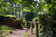 The gate at Narrator Farm (2)_NK2_2204 (Jean Fry) Tags: dartmoor dartmoornationalpark devon englanduk gates moorland narratorfarm nationalparks trees uk westcountry woodland paths tracks