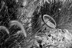 street still life-bodegn callejero-bw_DSC0973-W (taocgs) Tags: bn bw bodegn stilllife nfora amphora rbol tree olivo olive monocromtico monochrome