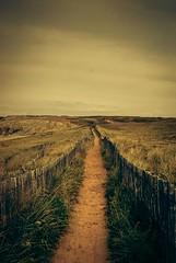 Along the way (erictrehet) Tags: morbihan aout extrieur t rivage texture paysage nikon quiberon summer d80 france nikkor nikonpassion landscape lumire light couleur color bretagne