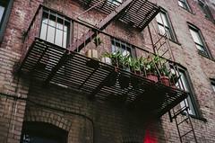 (Levi Mandel (@levimandel)) Tags: 35mm film scan noise grain nyc newyorkcity fireescape flowers plants cutty gothamist