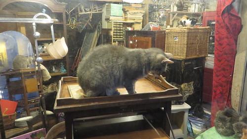 20161011-48 Senlis » L'antiquaire aux chats