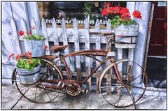 Flower Power Bicycle (Thomas Dwyer) Tags: bike bicycle rusty old vintage antique flowers pots storefront display nikon coolpixa thomasdwyer nik lightroom