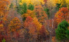 Nature's Palette (Zack Mensinger) Tags: minnesota fall fallcolors fallcolor 2016 canon5dmarkii 70200mmf4l canon70200f4l northernminnesota onlyinmn exploremn nature naturalbeauty northwoods