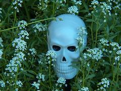 planted (Trixter13) Tags: pixar toys starwars chewbaca placematskull halloween garden gravvestone flowers morningglorys twins democrat republican funny scary