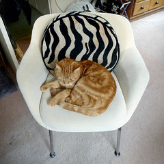 cat proof (buckaroo kid) Tags: london uk upholstery chair feline tabby ginger orange snooze