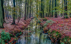 Light and Darkness in Forest (capvera) Tags: forest fort automne autumn darkness light omnres lumire ruisseau reflects reflections