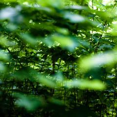 Across Forest Floors 009 (noahbw) Tags: d5000 dof nikon ryersonwoodsforestpreserve abstract blur depthoffield forest landscape leaves light natural noahbw shadow spring square woods