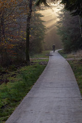 God Rays Shining on the Path (Tbo-art) Tags: nature color colorful group path together tree forest bright flora season people bicycle treetrunk leaves woods branch trunk bicyclepath walkingpath branches autumn fog mist haze godrays crepuscularrays sunbeam sunrays shining apeldoorn gelderland netherlands streetphotography