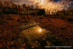 End Of The Day (T i s d a l e) Tags: tisdale endoftheday wetlands swamp sunset farm autumn fall november 2016 easternnc