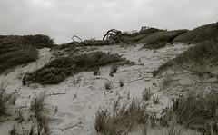 shelley dune (Kenneth Rowe) Tags: bw blackandwhitelandscape monochrome multipleexposures shelleybeach dune