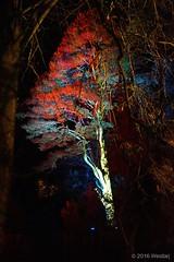 DSC04150 (Twareg) Tags: 2016 aboretum bpw enchanted forest westonbirt bathphotowalk gloucestershire england