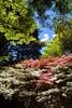 _MG_4448 (TobiasW.) Tags: spring frühling fruehling garden gardenflowers gartenblumen gärten garten blue mountains nsw australien australia backyard public