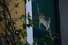 Valloria (115) (Pier Romano) Tags: valloria porte porta dipinta dipinte door doors painted imperia liguria italia italy nikon d5100 paese town dolcedo artisti pittori