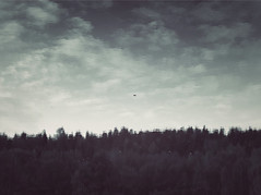trees upside down (HeyFromTheMoon) Tags: lake sky upsidedown nature norh nordic water clouds forest