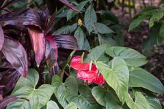 Sub-tropical lushness (idunbarreid) Tags: sub tropical plants