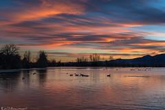 Haven (Bill Bowman) Tags: sunset cootlake bouldercolorado canadageese brantacanadensis