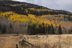 Cascade Creek Color (Jeff Mitton) Tags: cascadecreed quakingaspen fall autumn fallcolor mountain colorado rockymountains landscape earthnaturelife wondersofnature