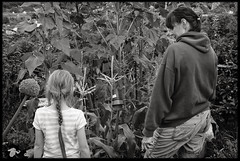 6th of August 2016 (Paul of Congleton) Tags: diary august 2016 rebecca becky smallperson stephanie steph missus garden sweetcorn myeverydaylife monochrome blackandwhite digital sony rx100