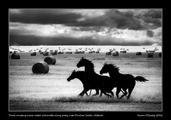 Three mustang horse metal silhouette along entry into Pincher Creek, Alberta (kgogrady) Tags: afternoon infrared landscape silhouette summer threemustanghorsemetalsilhouette pinchercreek alberta canada blackandwhite canadianprairies canadianlandscapes blackwhite cans2s 2016 bw canadianmountains albertalandscapes ab fujifilmxpro1 fujinon fujifilm clouds westerncanada weathered xpro1 xf18135mmf3556oiswr bales heritage haybales hay highway6 mountains