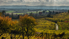 Autunno e vigneti (andbog) Tags: caluso piemonte piedmont collina hill viti landscape paesaggio torino turin to canavese it path sentiero lives sony alpha ilce a6000 sonya6000 emount mirrorless csc sonya manual vintagelens classiclenses mf manualfocus sonyα sonyalpha italy italia manualfocusing sony⍺6000 sonyilce6000 sonyalpha6000 ⍺6000 ilce6000 minoltamdzoom3570mmf35 minoltamd 3570mm f35 minoltalens natura nature morning apsc autumn autunno fall tree alberi nuvole clouds widescreen 169 16x9