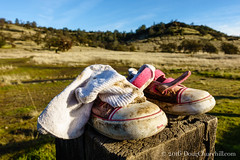 333•366 • 29 November 2016 • lost soles… (Doug Churchill) Tags: 365 366 sonyrx100m3 alone ambient apparel closeup daylight deject dejected dejection down emptiness empty fashion humaninterest individual loneliness lonely loss lost lowangleview lowangleviews outside perspective project project366 sad sadness secluded seclusion shoe shoes single solo sorrow stilllife streetscene streetscenes uncertain uncertainty unlucky void