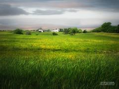 Prairie farm (mrbillt6) Tags: northdakota stutsman landscape grass farm rural prairie plains outdoors summer